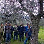corso-potatura-olivi-139