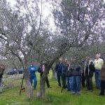 corso-potatura-olivi-140