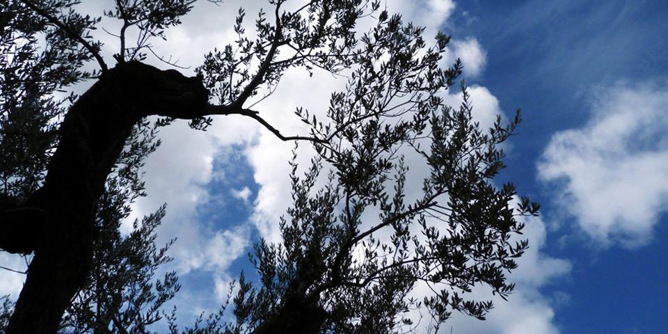 frantoio-olio-oliva-extra-vergine-umbria