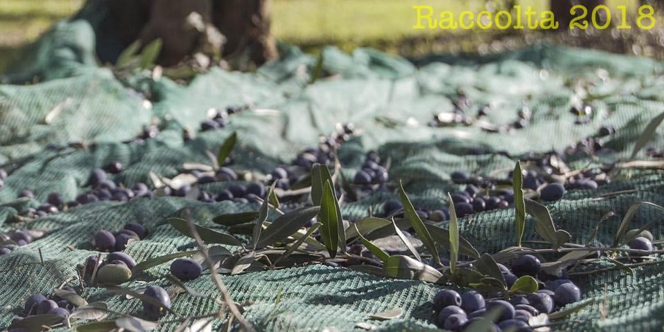 raccolta-olive-2018-umbria